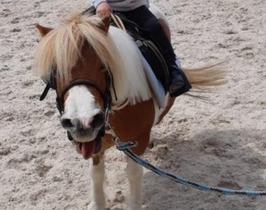 Unsere Ponys und Pferde